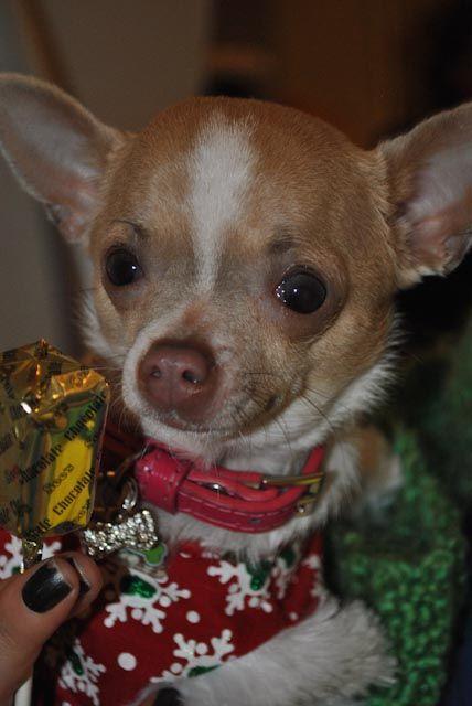 Adopt Abby On Petfinder Dog Adoption Pet Adoption Adoption