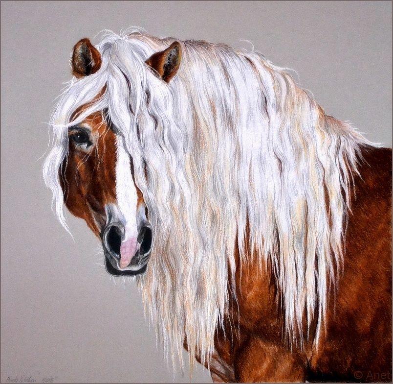 Drawing-Haflinger horse by Ennete   animal artwork 2   Pinterest ...