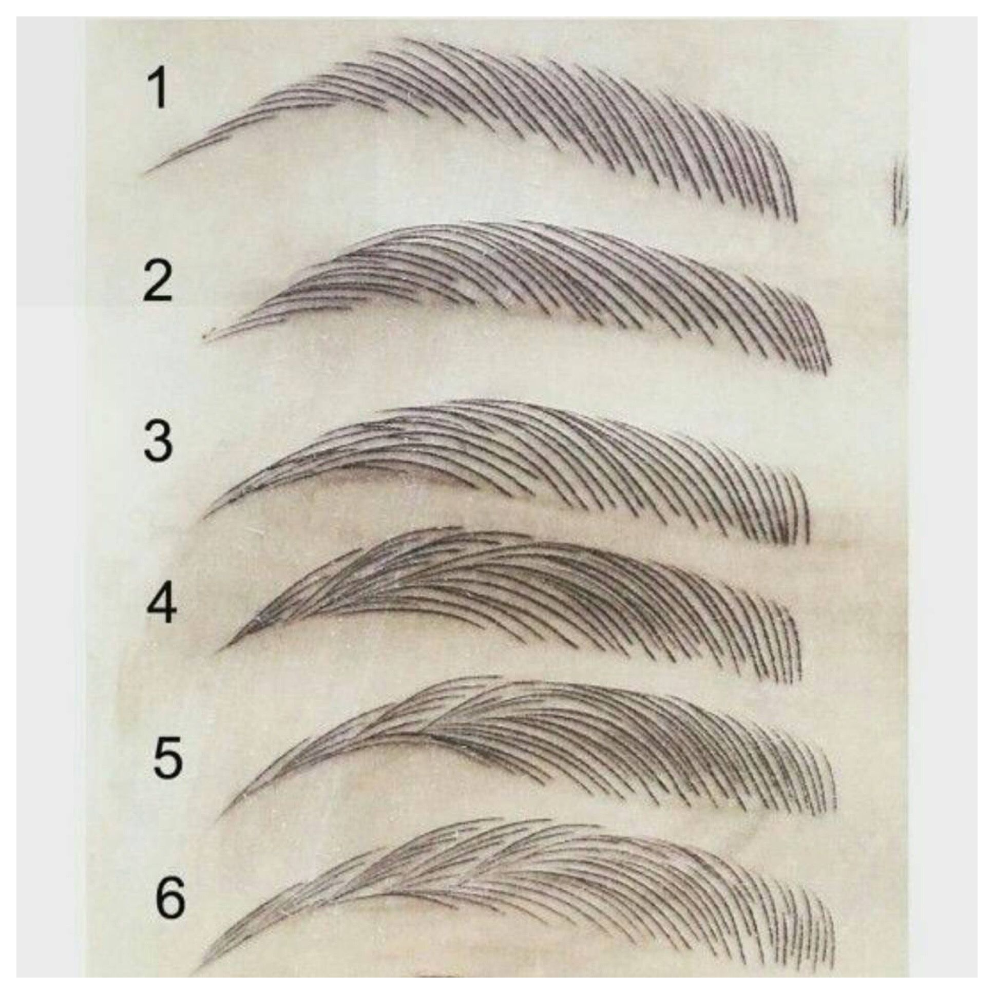 Microblading Strokes And Variations How To Draw Eyebrows Microblading Microblading Eyebrows