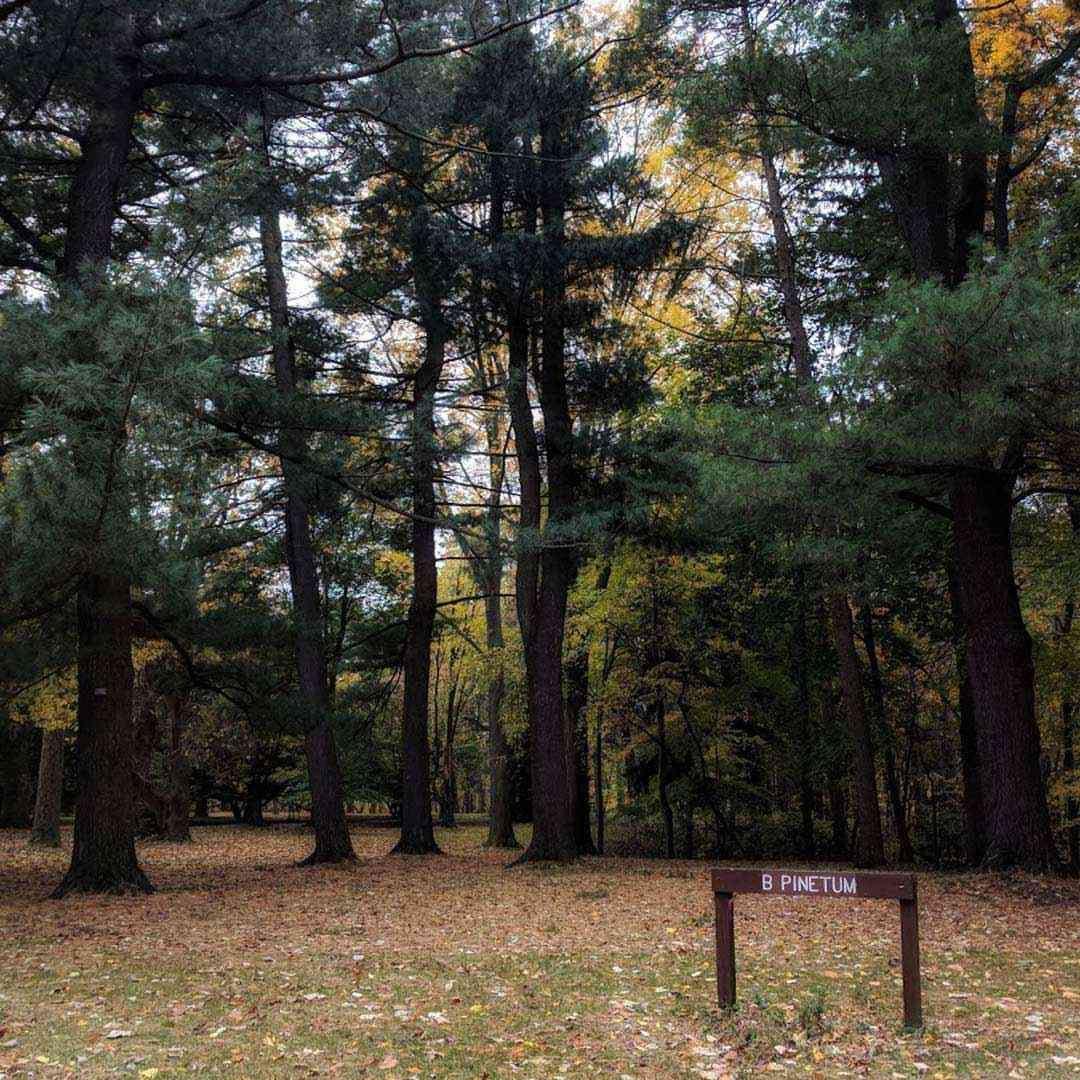 Durand Eastman Park Day Trips County Park Park Landscape