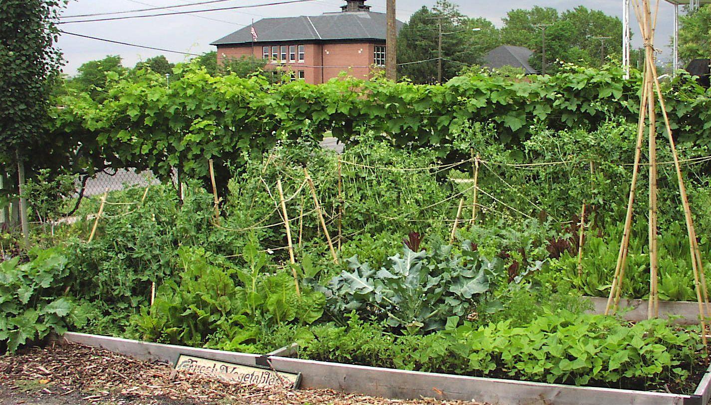 Ordinaire Planting A Vegetable Garden In Las Vegas | The Garden Inspirations