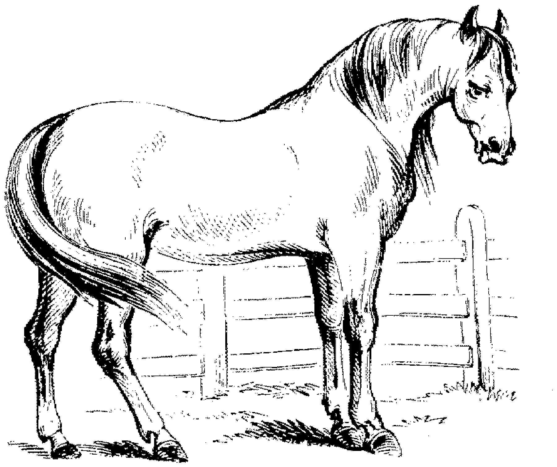 Pin von Eva Gubik auf horses | Ausmalbilder pferde ...