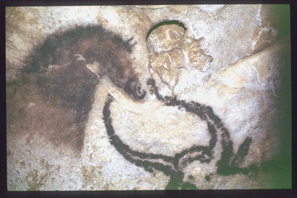MONTIGNAC (Dordogne, 24). Grotte de Lascaux. Bilan des études. Récapitulation. Légende : Salle des taureaux, paroi gauche (nord) : représentation d'un cheval polychrome de profil droit, au-dessus de l'aurochs noir de profil gauche.