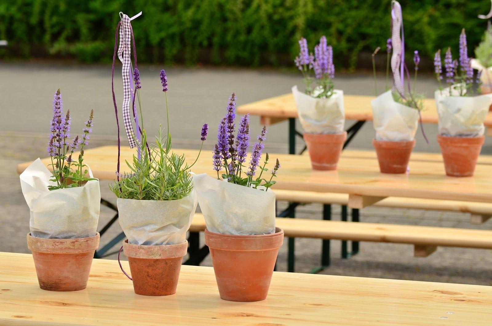 Top 5 Best Indoor Plants for your Bedroom. Bug off, Bug