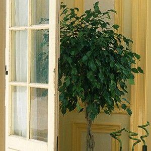 Selection De 24 Plantes Depolluantes Pour Votre Interieur Plantes Depolluantes Plante Plante Interieur Depolluante