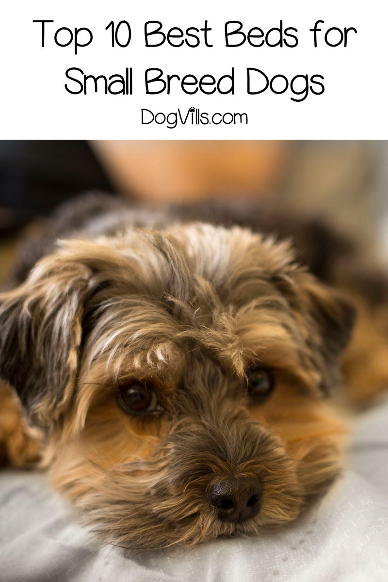 10 Great Dog Beds For Small Dogs Dog beds for small dogs