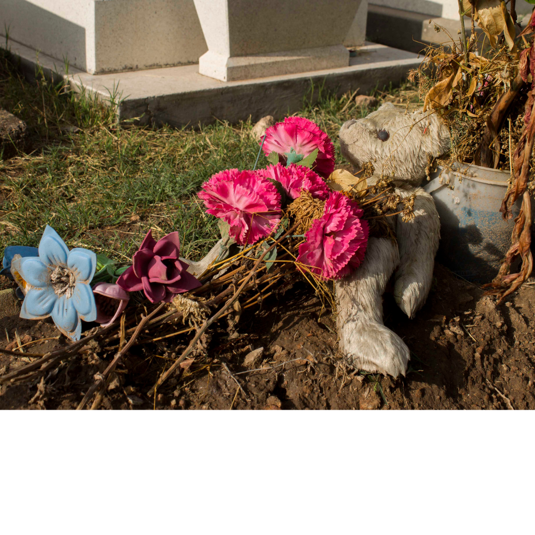 Why you shouldn't bury your pet in the backyard | Dog ...