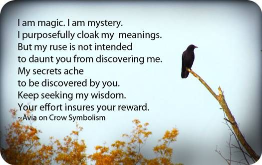 Crow Symbolism And Crow Meaning Quotables Gotta Love Em