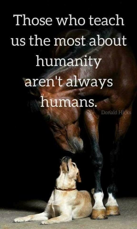 Those Who Teach Us The Most About Humanity Aren't Always Humans New Love Animal Quotes