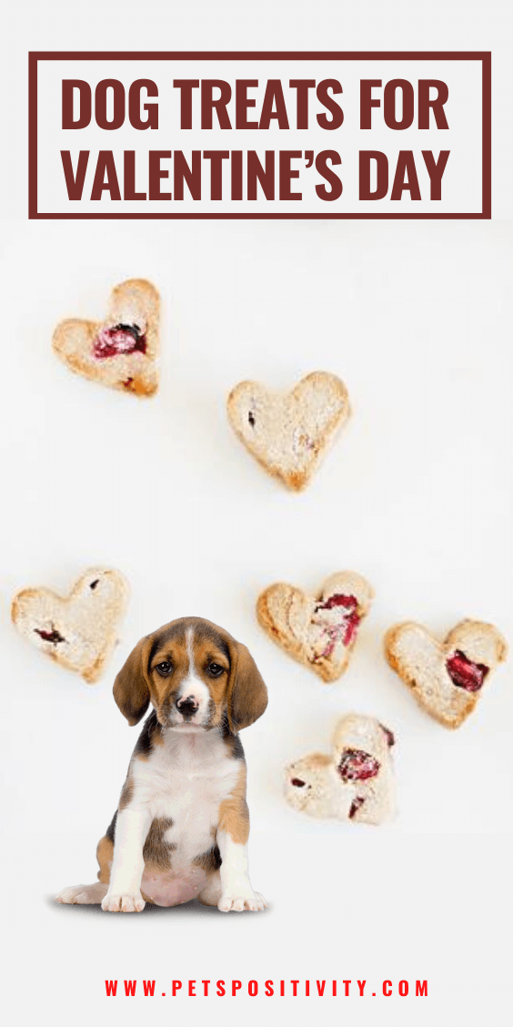 11 EASY HOMEMADE DOG TREATS FOR VALENTINE'S DAY