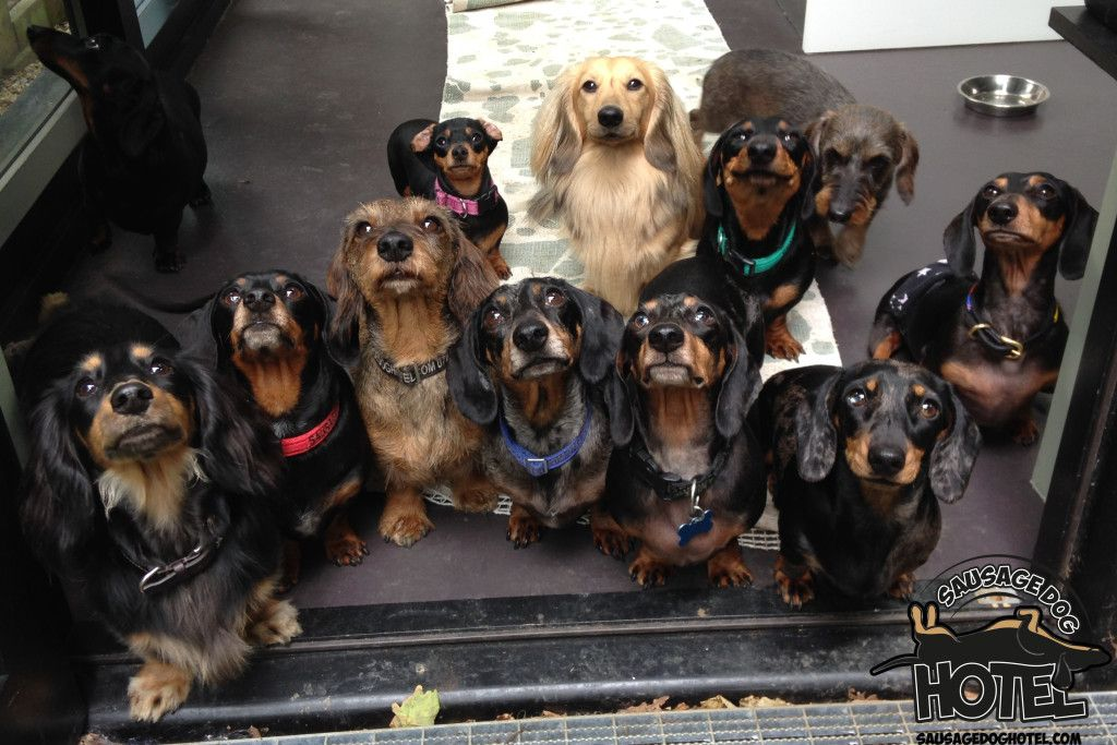 Gallery Archives - Sausage Dog Hotel