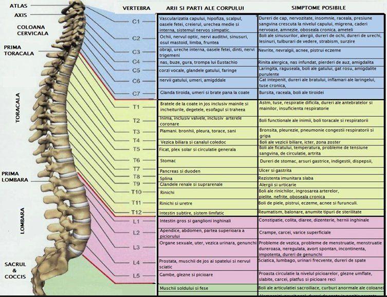 varicoză și coloană vertebrală