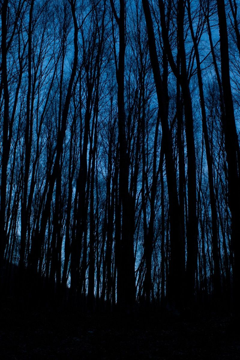 New free photo from Pexels: https://www.pexels.com/photo/dark-dawn-dusk-evening-186692/ #dawn #landscape #nature