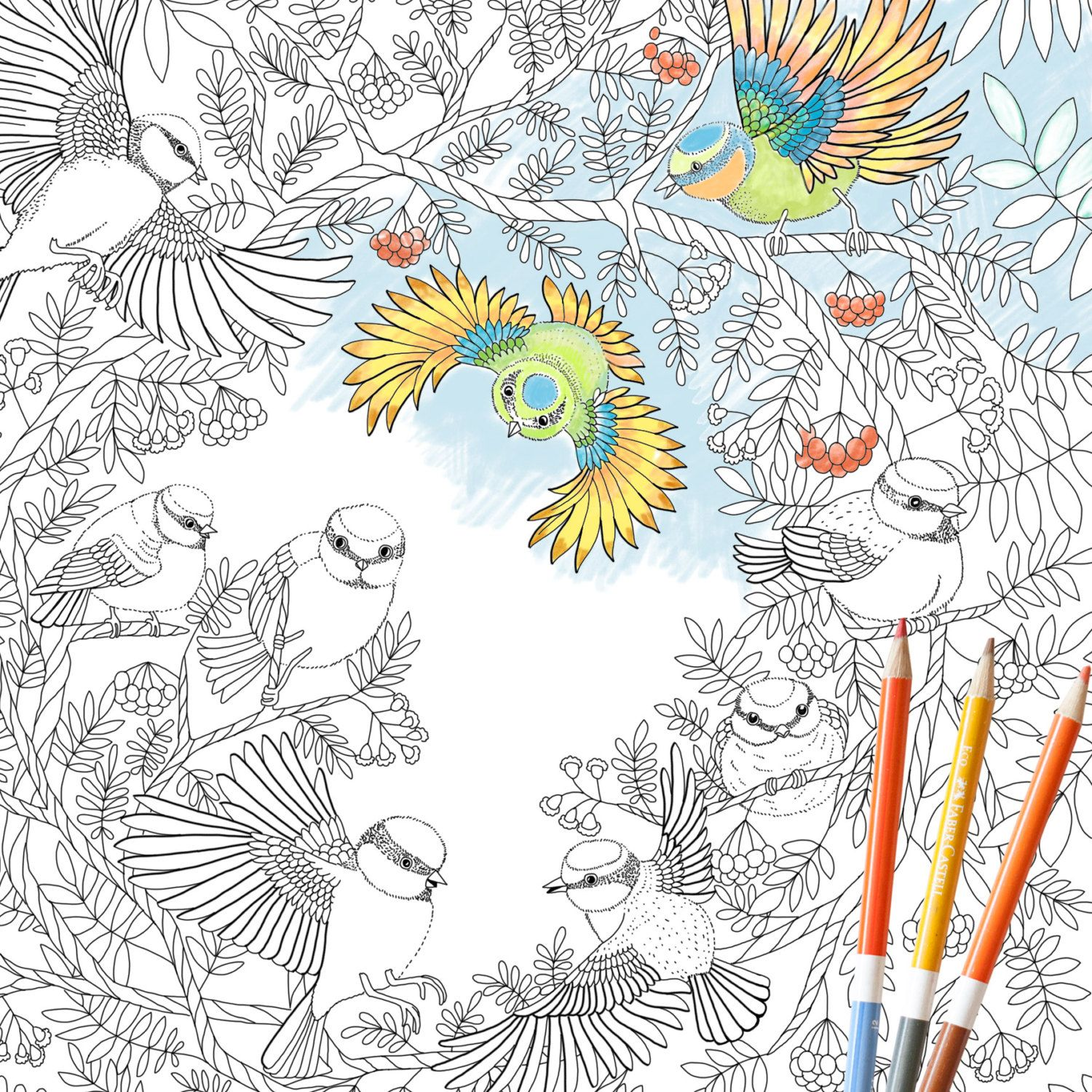 Coloring Page INSTANT DOWNLOAD Paradise Birds - Adult Coloring ...