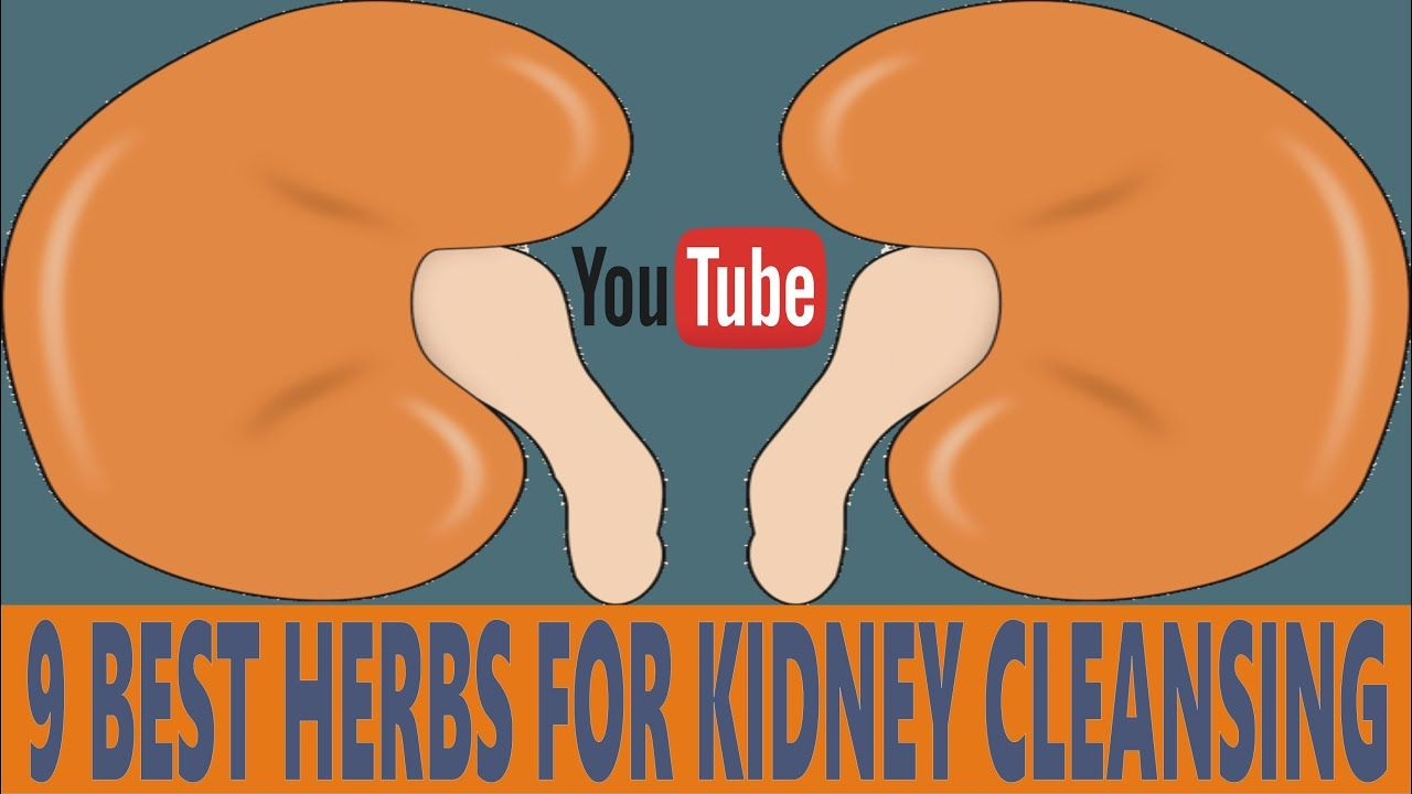 nine best herbs for kidney cleansing