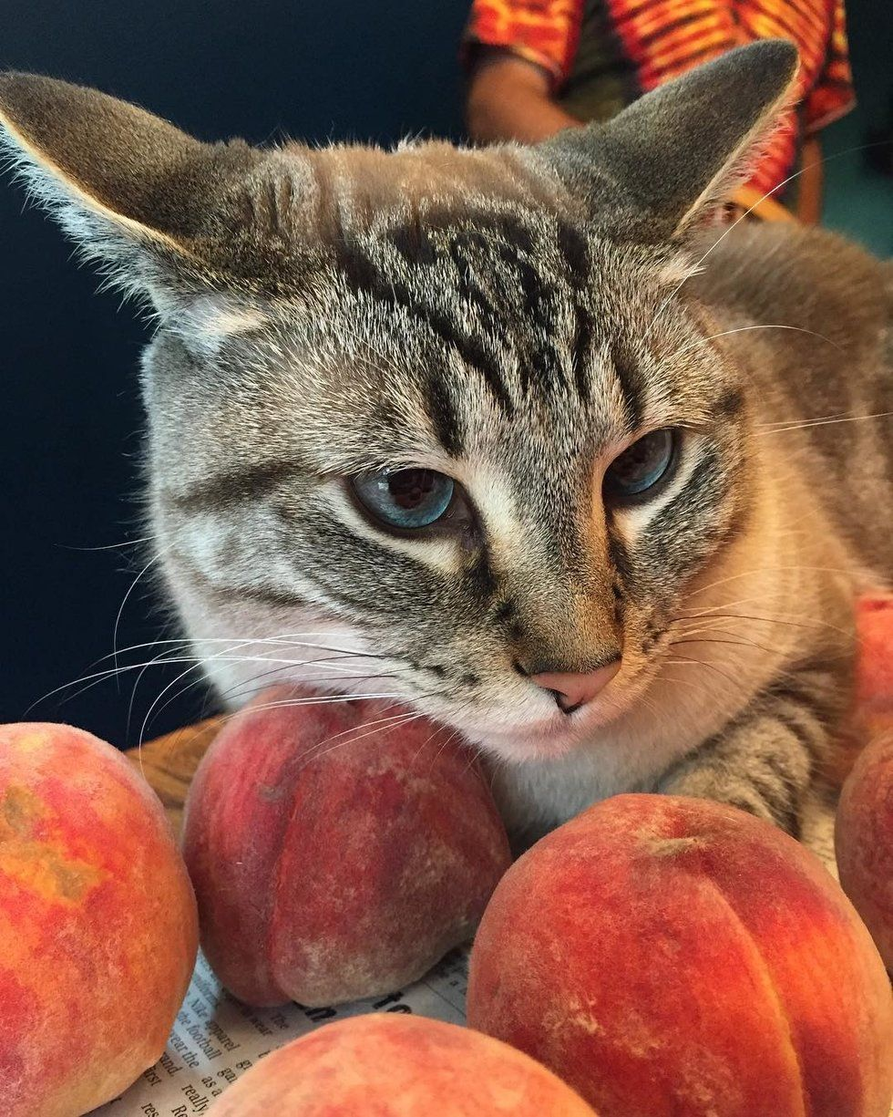 Family Adopts Kitten And Later Discovers His Love Of Snuggling Peaches With Images Funny Cat Images Cat Love Cats