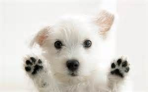 cutest puppies - Lavasoft Secure Search Yahoo Image Search Results