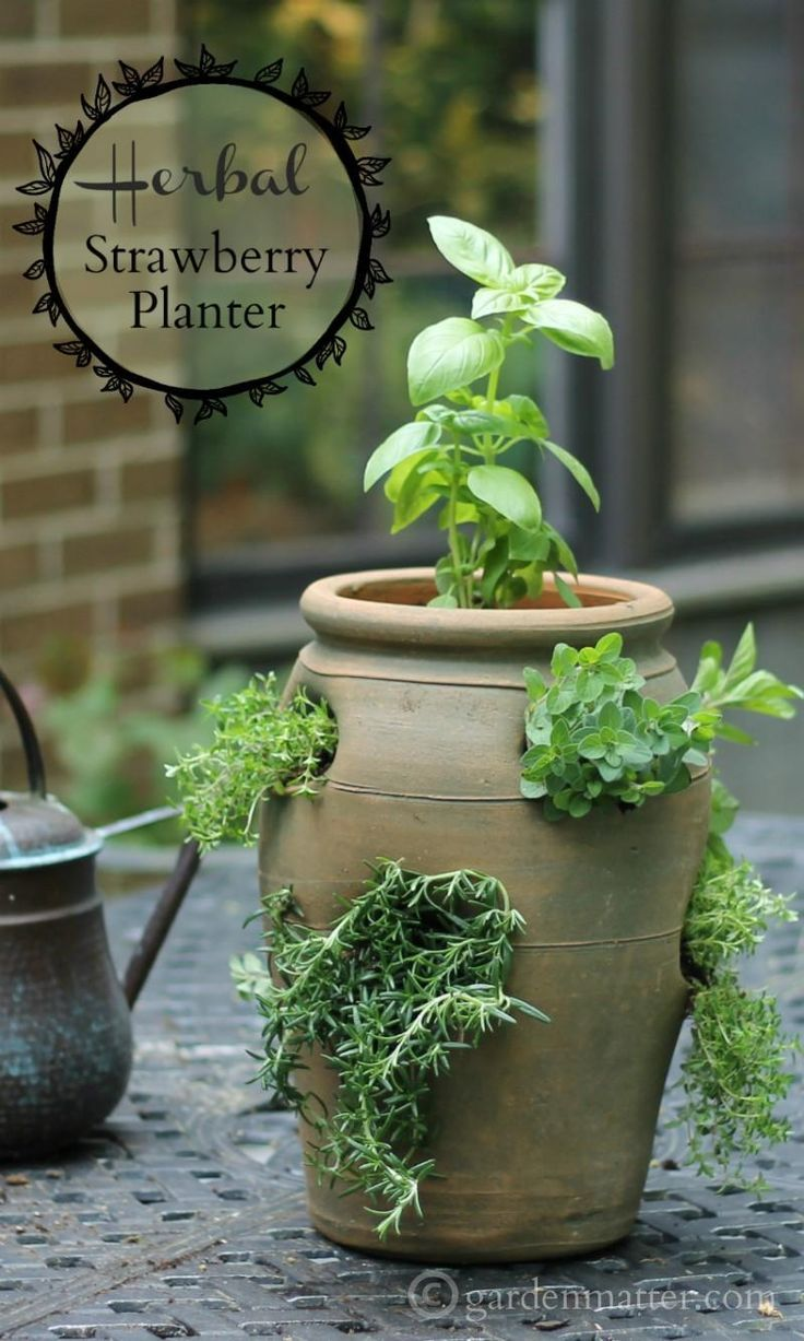 Growing Herbs In A Strawberry Pot For Easy Access And Small Spaces Strawberry Pots Herb Garden Pots Herb Planters
