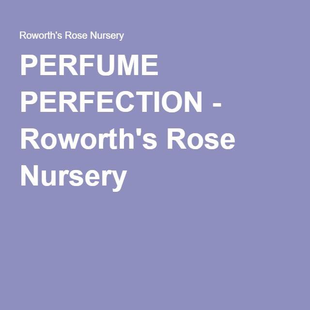 PERFUME PERFECTION - Roworth's Rose Nursery