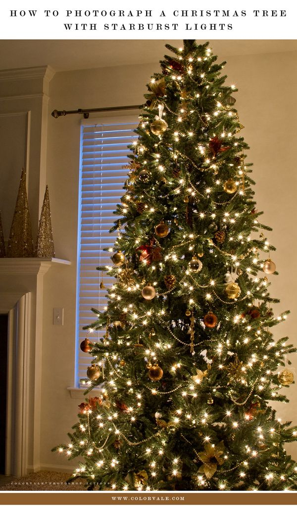 How To Photograph A Christmas Tree Trees, Beautiful and Christmas