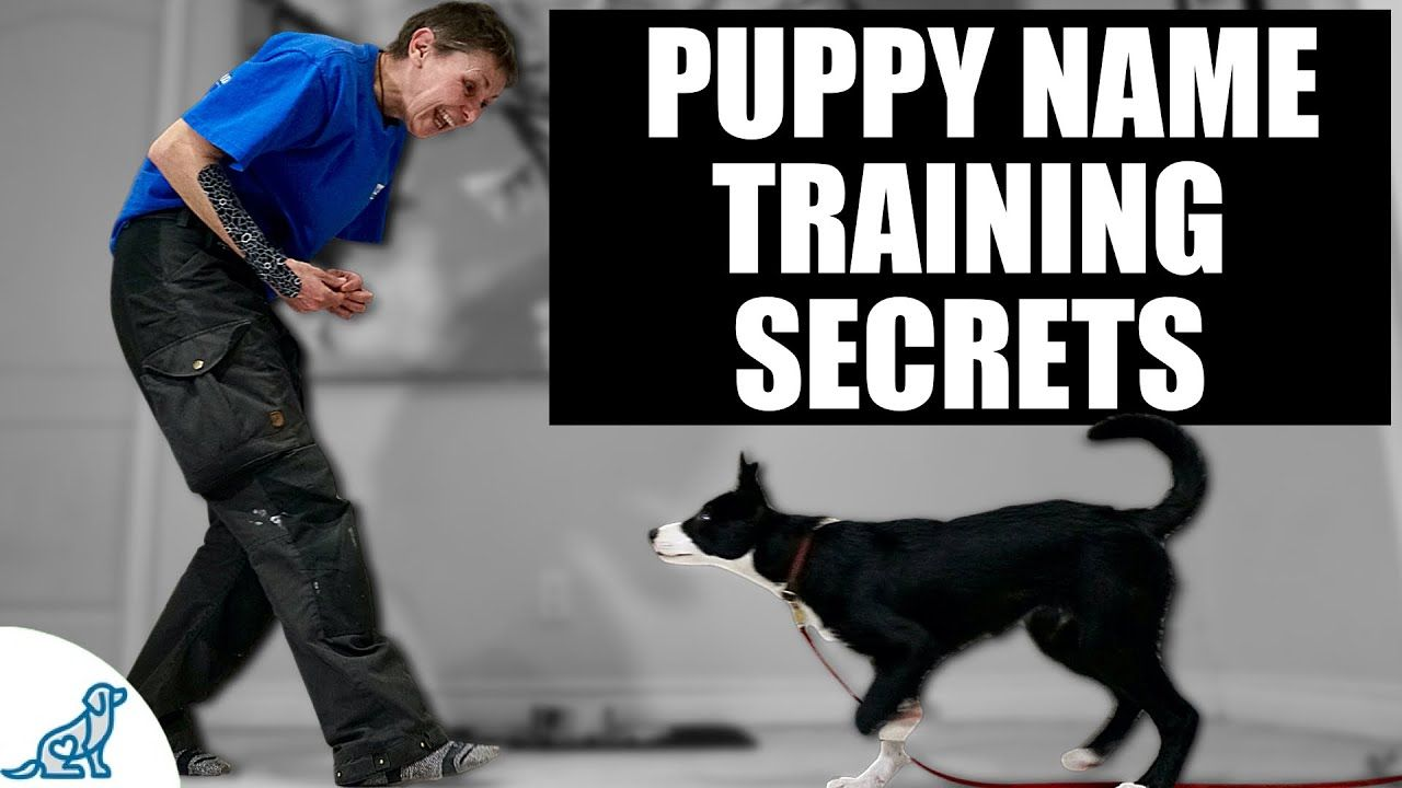 The Puppy Training Secret To Teaching Your Puppy Their Name Https Youtu Be Rran1kxev1o Puppy Training Puppies Puppy Names