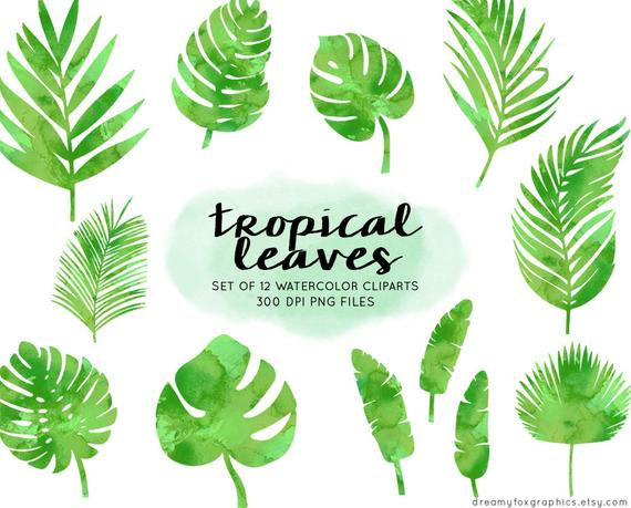 Tropical Leaves Watercolor Clipart Watercolor Tropical Leaves