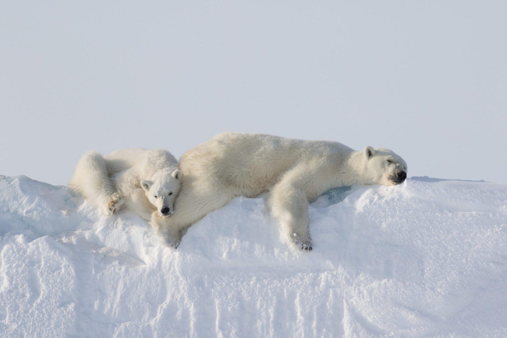 Pin On Arctic Antarctica