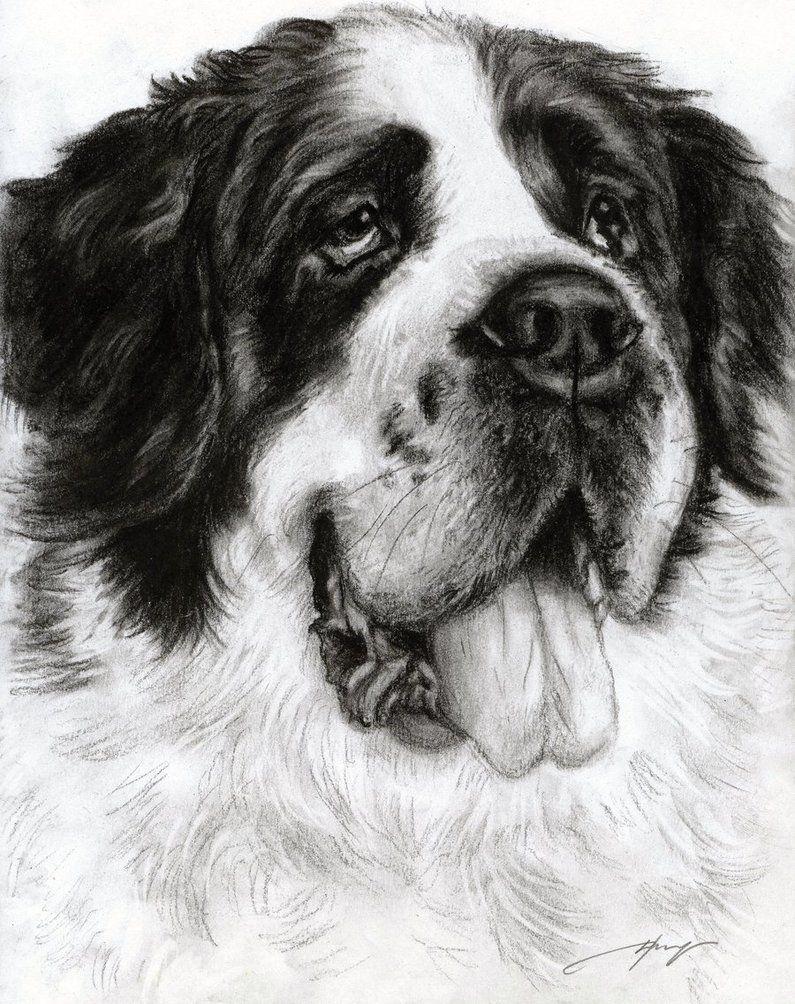 saint bernard by danguole dog art various artists pinterest