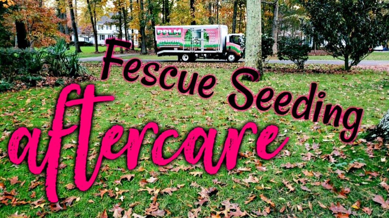 Aeration and fescue overseeding aftercare tips have you