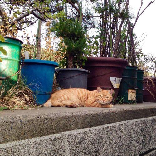 多摩川の猫 #cats #ねこ #猫 #のらねこ #野良猫
