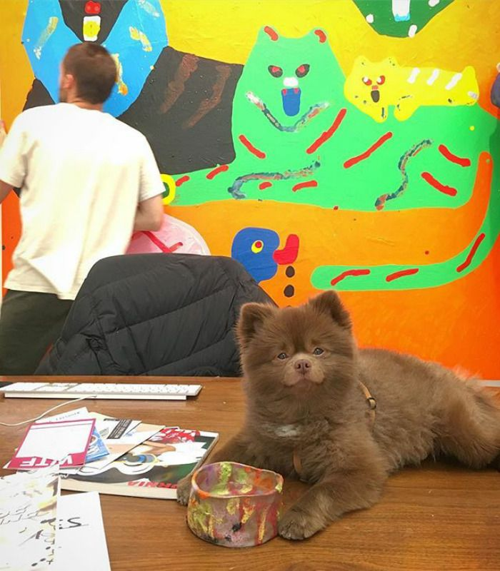 Bear Dumped By A Breeder Gets A Job At An Art Gallery Baby Pomeranian Shelter Puppies Dog Words