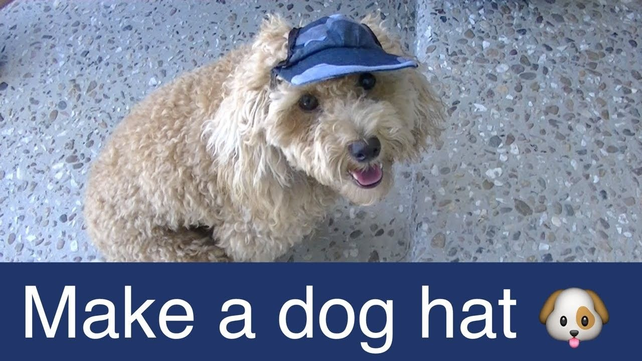 Make Dog Visor Hat Cap Diy Dog Food Groom Clothes A Tutorial By Cooking For Dogs Dog Clothes Diy Dog Hat Diy Dog Stuff