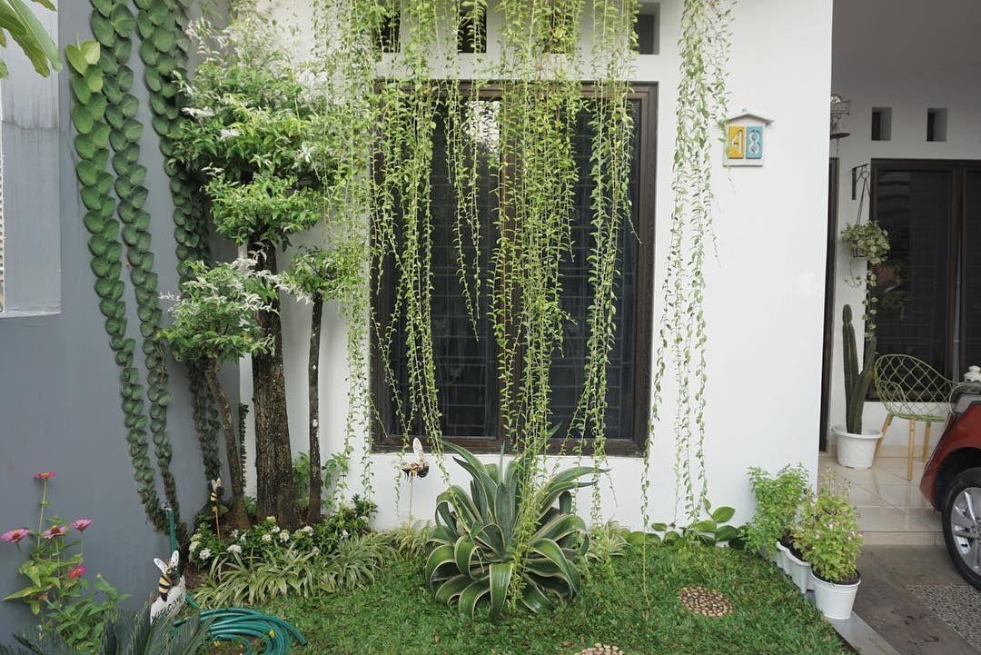 Minggu Kemarin Ganti Melati Jepang Yang Udah Mulai Membotak Dengan Soka Nah Sekarang Pelan Pelan Isi Kebun Dengan Beberap Rumah Rumah Minimalis Dekorasi Rumah