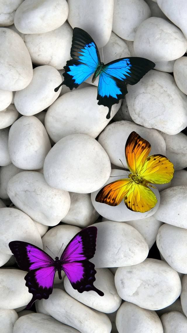 Zedge Free Downloads For Your Cell Phone Free Your Phone Butterfly Wallpaper Iphone Blue Butterfly Wallpaper Butterfly Wallpaper Full hd butterfly stone wallpaper