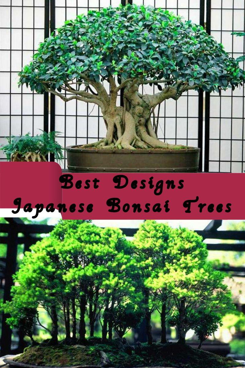 Best Bonsai Trees Styles Vary