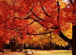 Colors if fall