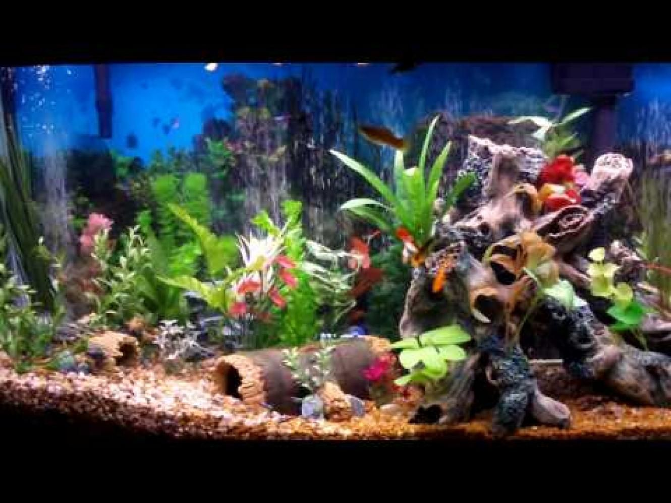 Fish... Love watching them, so soothing. I need a fish tank. | My ...