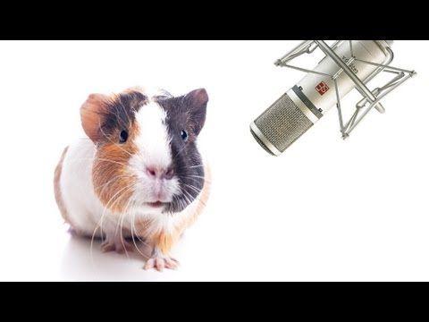 Pin on TALKING ANIMALS