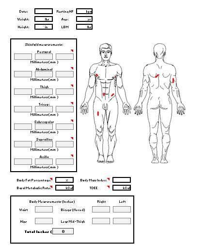 4 hour body measurements