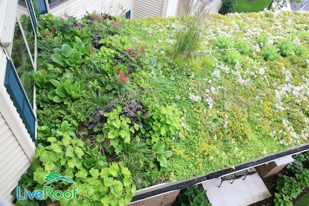 roof planting serene sun house | Custom green roof - shade plants like coral bells, ferns ...