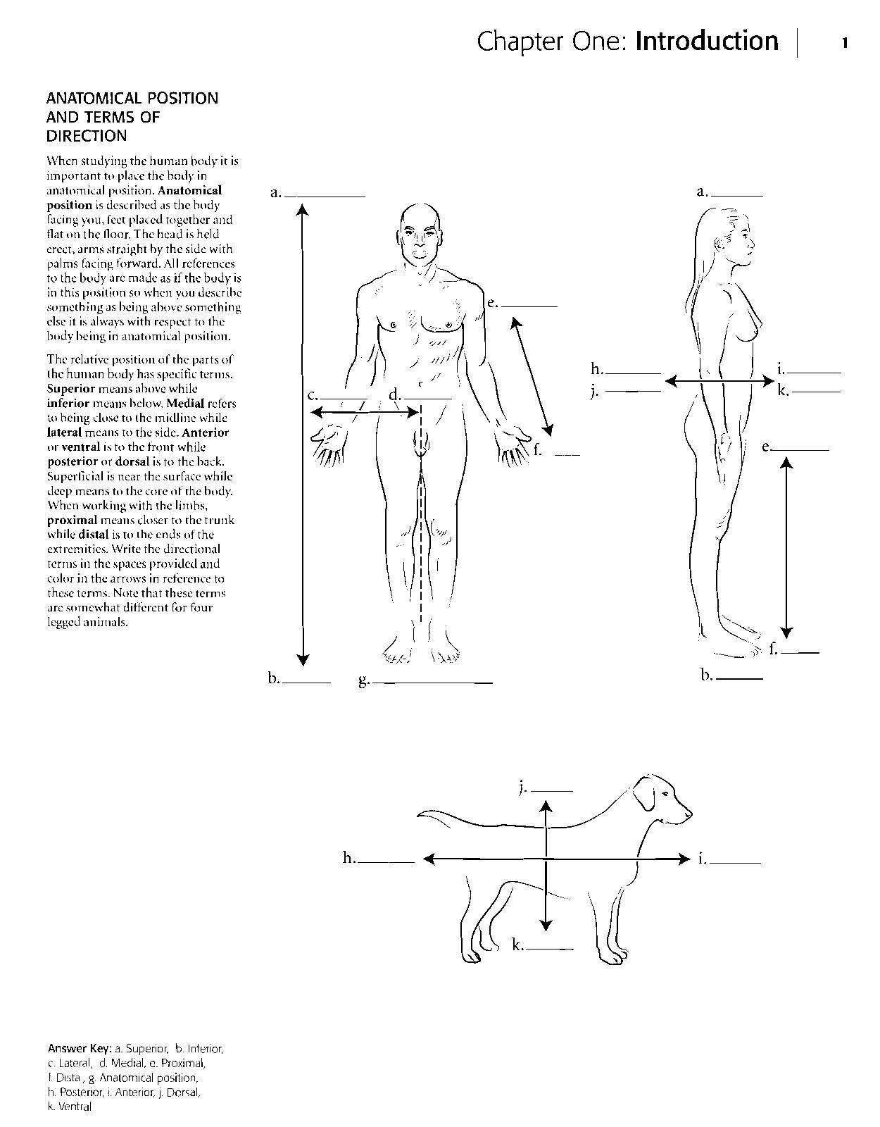 Kaplan Anatomy Coloring Book.pdf | Anatomy coloring book ...