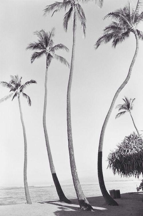 Source: tropical-escape22