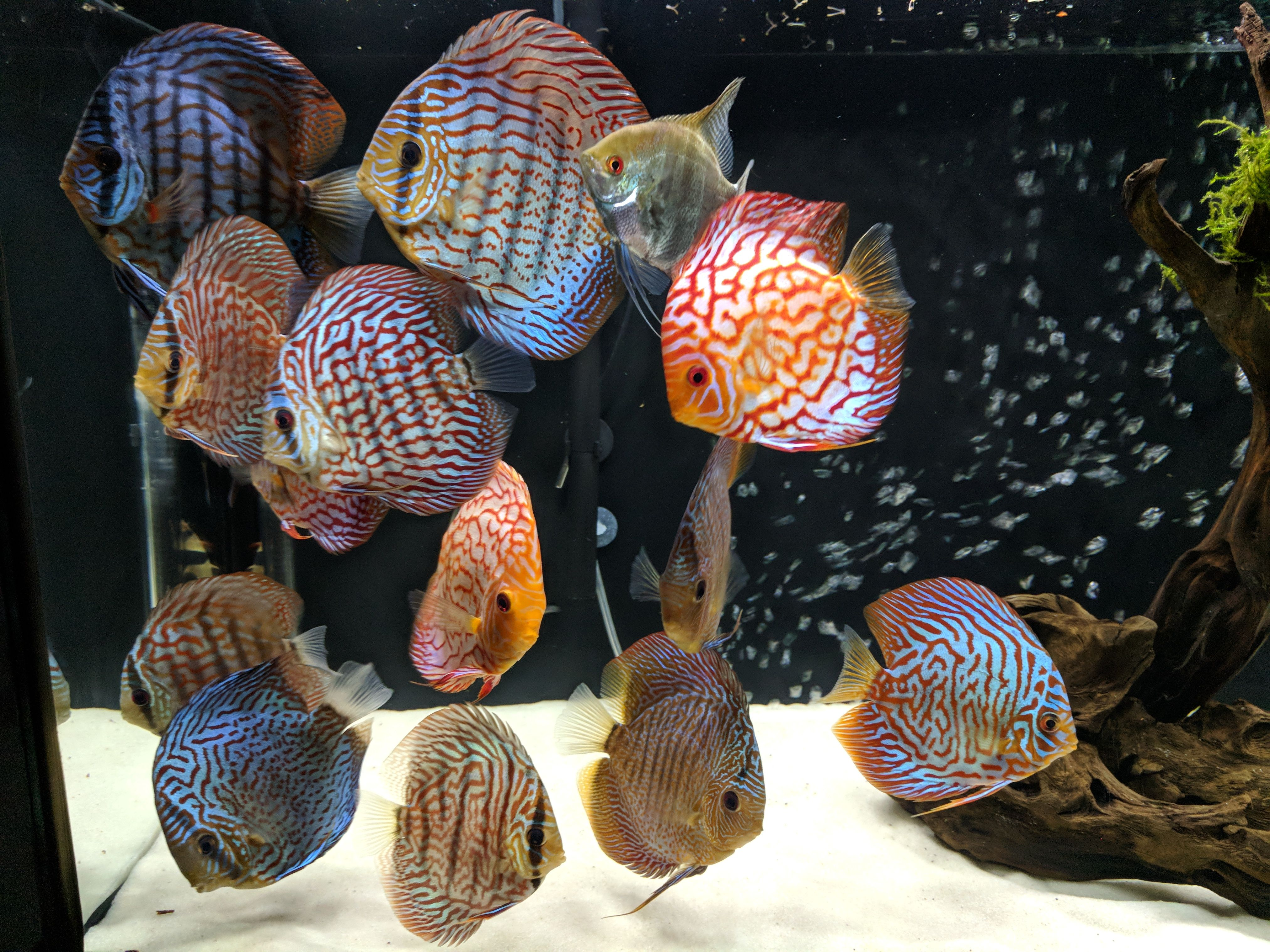 How To Care For Discus Fish Mistakes And Lessons Akvarium Diskus