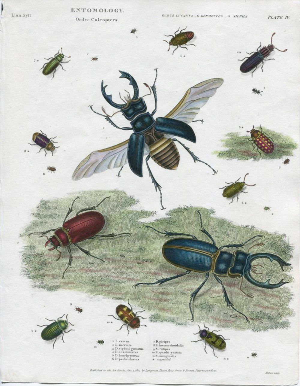 Antique insecte impression. Divers par VintageDecorPrints sur Etsy