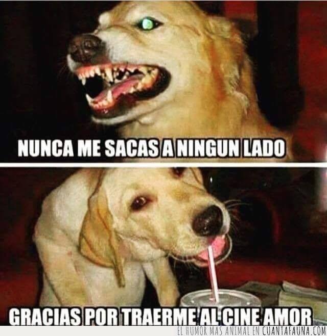 Nunca Me Sacas A Ningun Lado Dogs Animals Memes