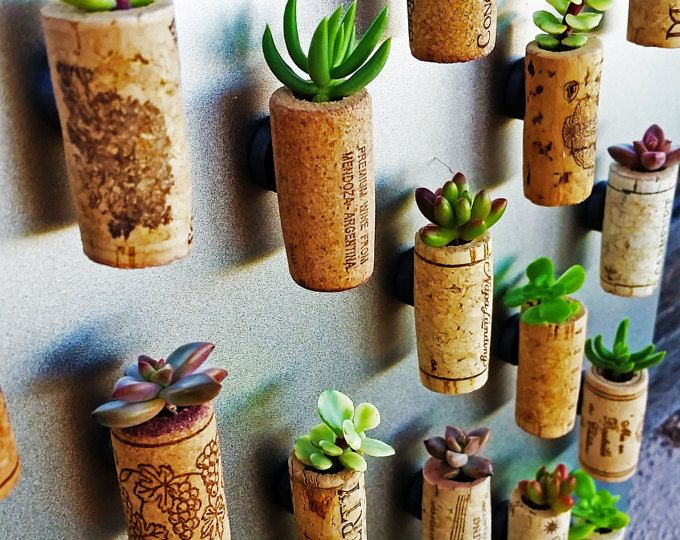 5 Succulent Wine Cork Planters mounted on magnets | Etsy