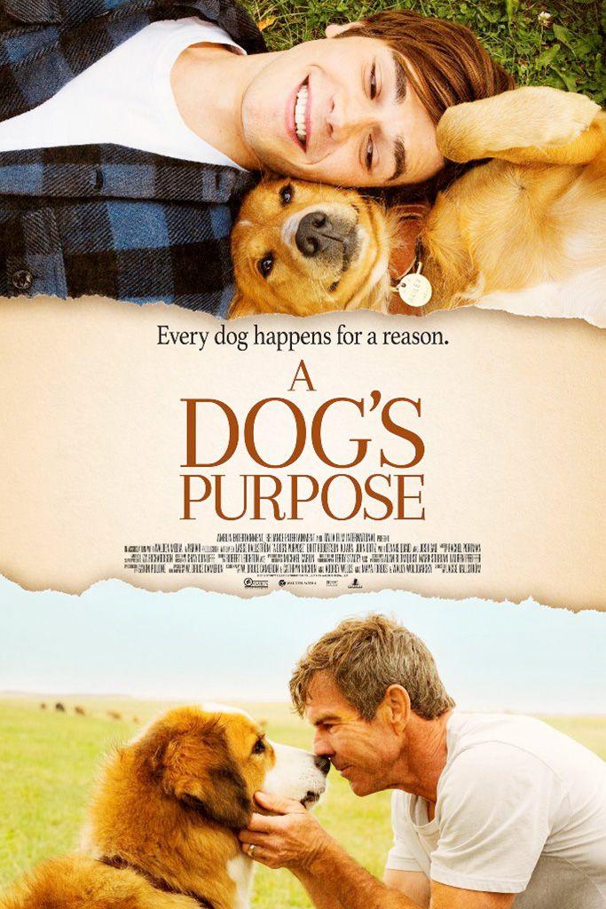 A Dog S Purpose A Dogs Purpose A Dogs Purpose Movie Dog Movies
