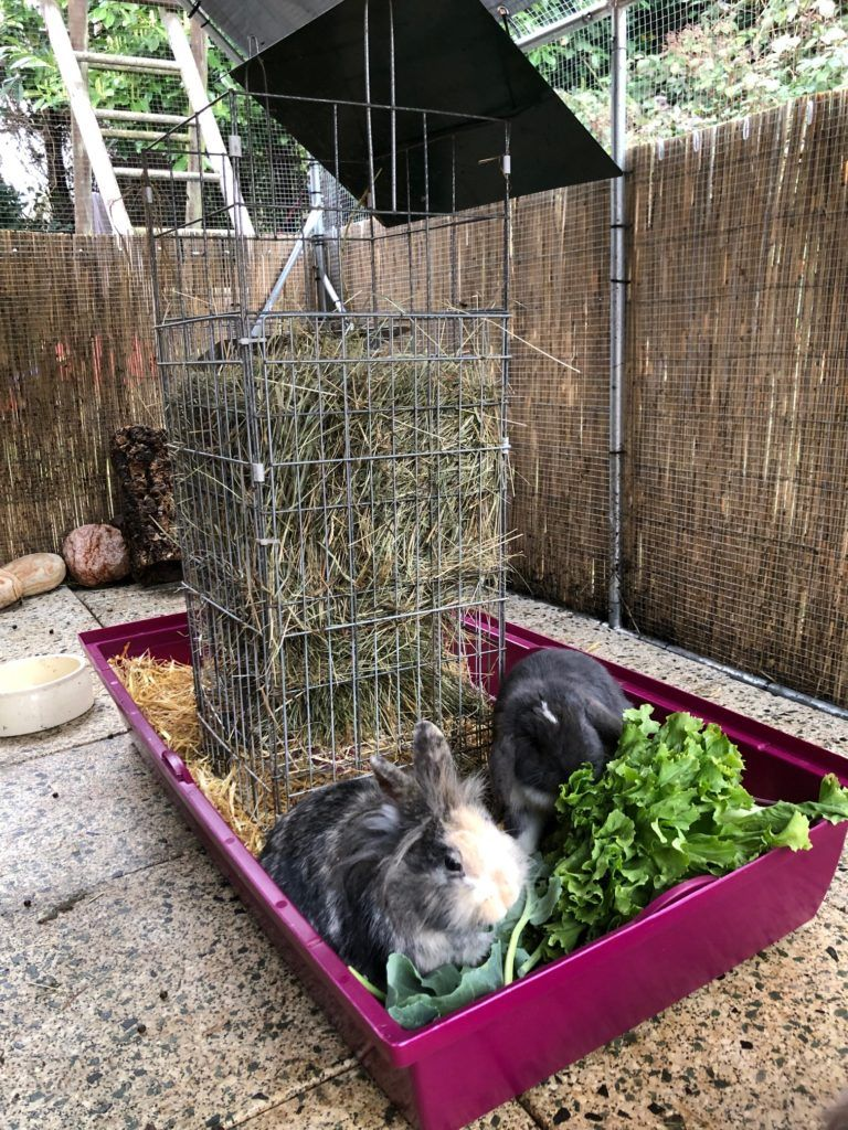 Der Richtige Kafig Kaninchen Freigehege Kaninchengehege