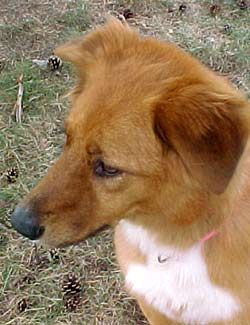 The Oakland County Animal Shelter Helps To Boost Adoptions With