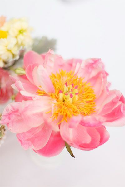 Pink and Yellow  #Flowers